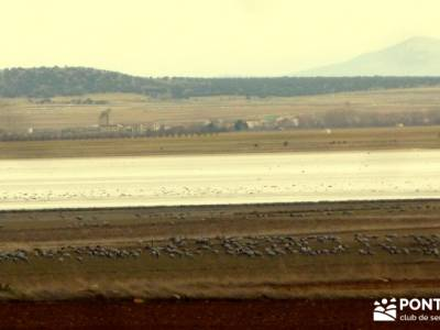 Hoces y cañones del Río Piedra y del Río Gallo -- Laguna Gallocanta - excursiones y senderismo;ru